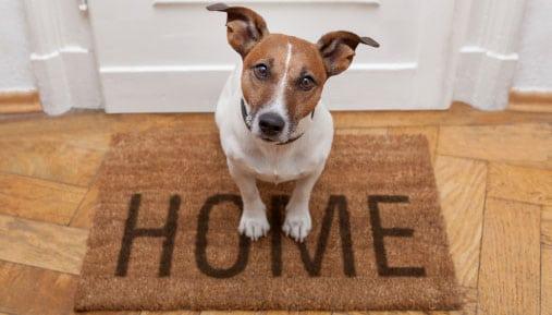 Why You Should Choose Short Term Pet Friendly Rentals